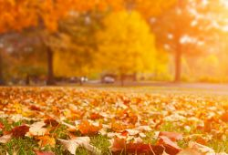 Selling_tips_for_Autum_-_1200x400.jpg