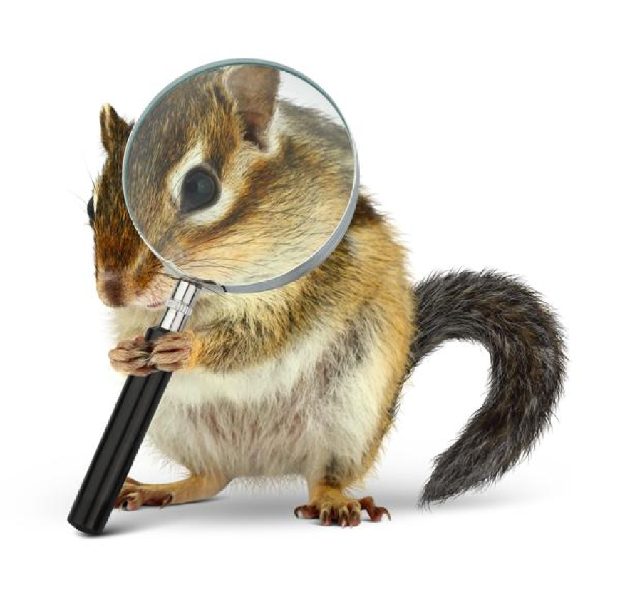 Chipmunk with a magnifying glass